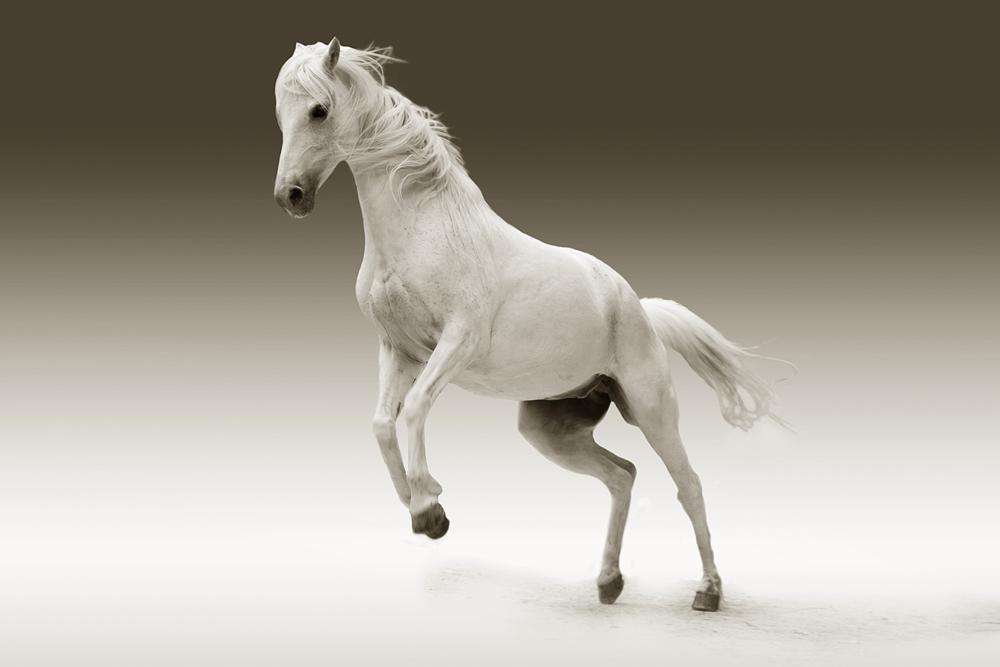 馬の脊髄食ってみた
